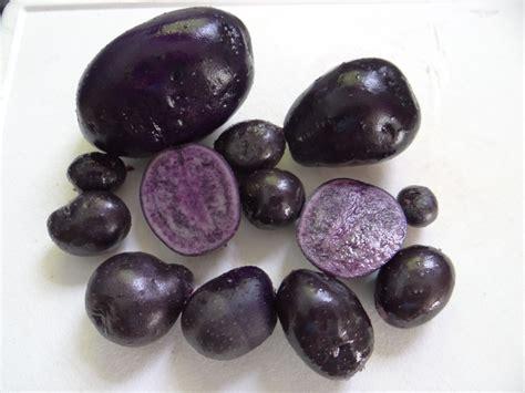 purple potatoes slow and steady