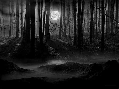 dark forest pictures   fun