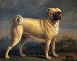 early pugs 17 best images about pugs in on language portrait and vintage