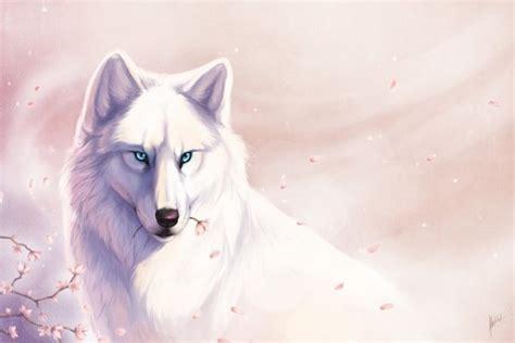 imagenes lobo blanco lobo blanco 12678