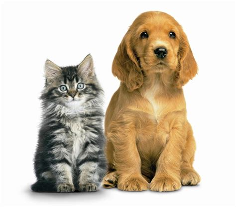 puppies and kittens cat intestinal worming