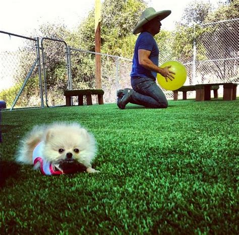 cesar millan pomeranian 119 best images about pomeranians on