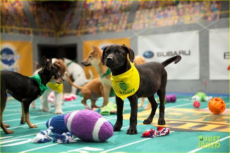 puppy bowl puppies 2017 puppy bowl 2017 meet the dogs the more photo 3853399 2017