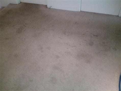 upholstery southton carpet cleaning sammamish washington carpet vidalondon