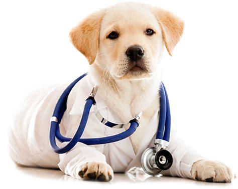 imagenes png animales cliniccl 237 nica nuuginuugi