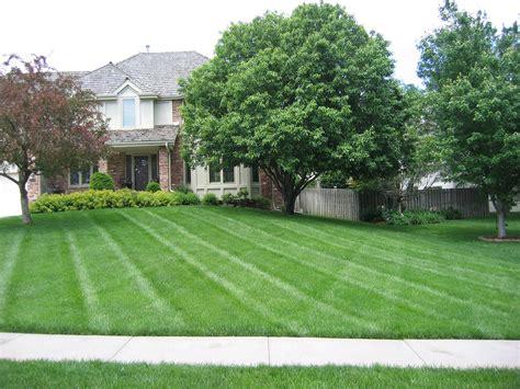 vip lawn and landscape lawn care