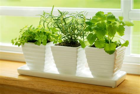 piante cucina emejing piante da cucina photos skilifts us skilifts us