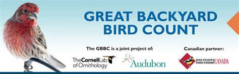 cornell great backyard bird count laboratorio de ornitolog 237 a de cornell planeta vital en