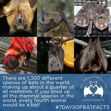 25 best ideas about bat facts on pinterest bat facts