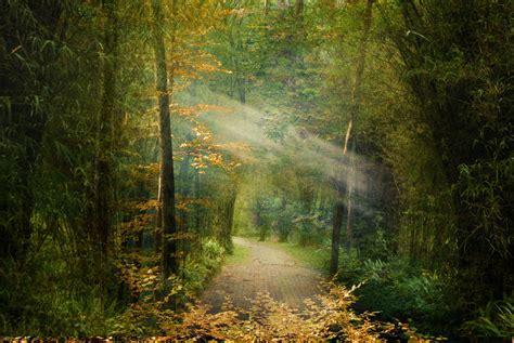light to my path a light unto my path by phatpuppyart studios on deviantart