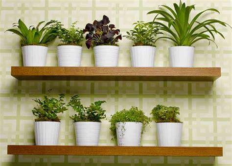enfermedades de las plantas de interior plantas de interior resistentes y m 225 s duraderas plagas