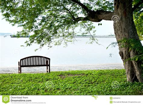 bench under tree wood bench under tree stock photo image 22255810