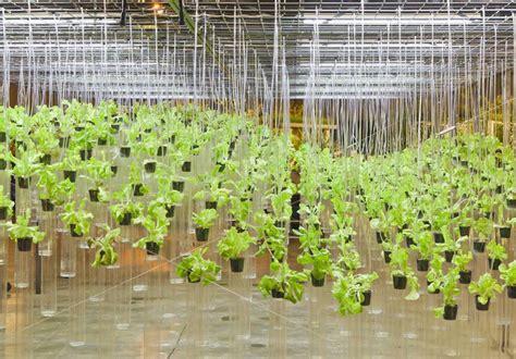 start hydroponic gardening