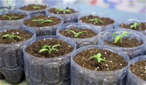 geranien pflanzen ab wann garten im februar