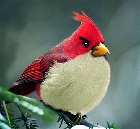 real life fun only october 2011 real life angry birds technabob