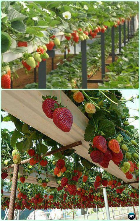 space saving strawberry garden gardening planter ideas