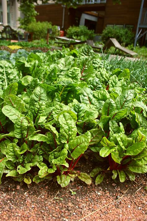 fall garden vegetables 17 best ideas about fall vegetable gardening on
