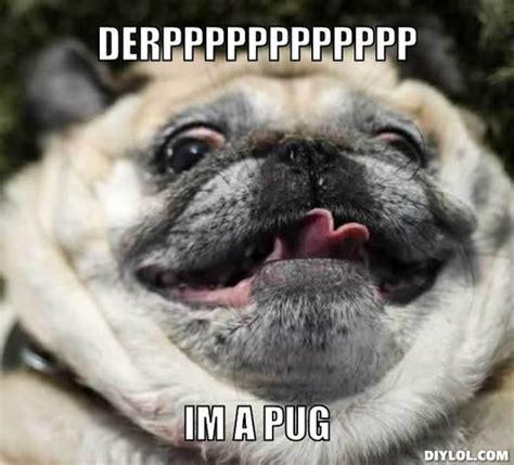 im a pug pug meme fap pug meme generator derpppppppppppp im a pug b1c98d jpg silly memes