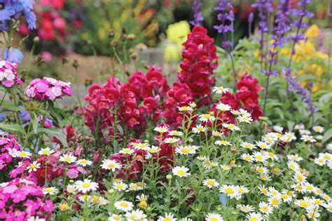 plant  grow perennials guide install  direct