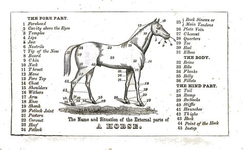 Similiar Chart Parts Of The Horse Keywords