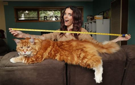 The Biggest And Longest Cat in the World   Amazing Things