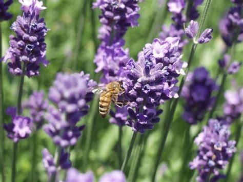piante aromatiche da giardino piante in giardino piante da giardino piante per il