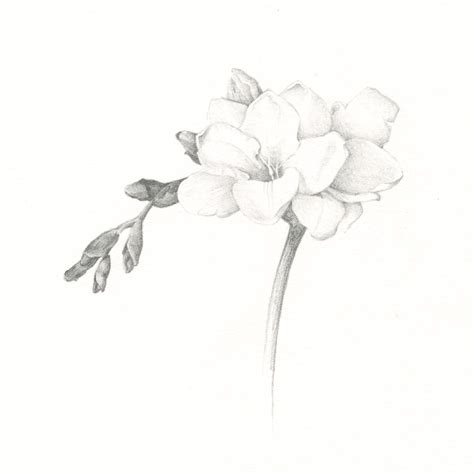 drawings susan sapanara