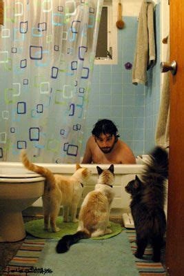 cat peeing in bathtub eating alone cats and bathroom doors on pinterest