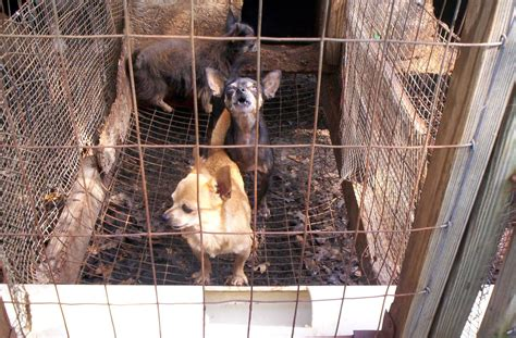 are puppy mills file puppy mill 01 jpg wikimedia commons