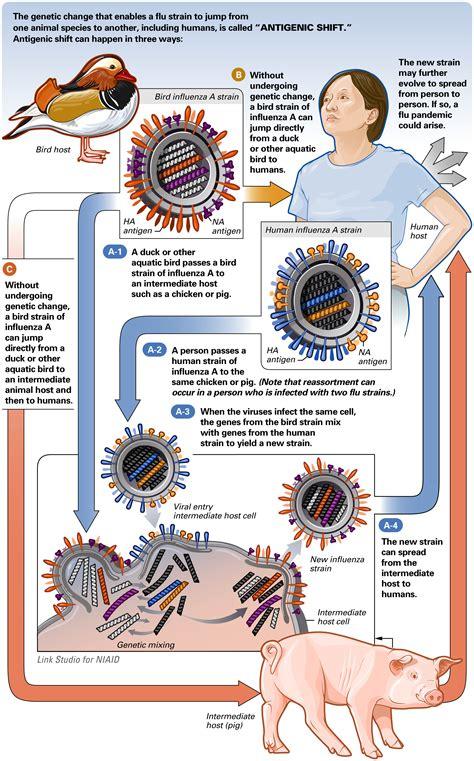 Cctv Di Lung Antigenic Drift Vs Antigenic Shift