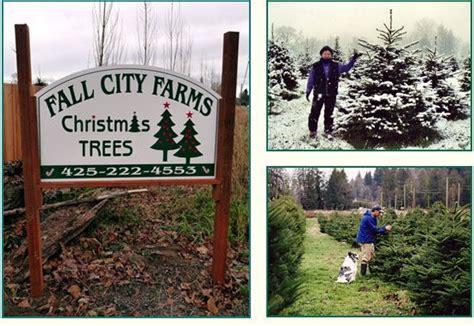 cut your own christmas tree farm in carnation season