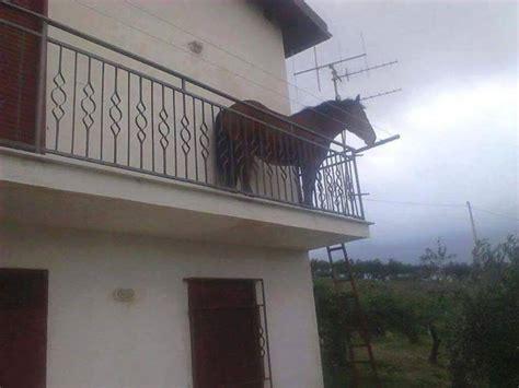 sesso sul terrazzo un cavallo sul balcone ecco dove 232 stata scattata la foto