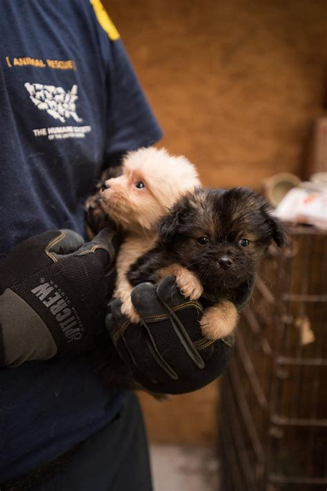 list of puppy mills in ohio 12 ohio puppy mills rank among the worst in u s