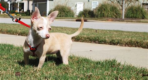 puppy daily schedule why developing a daily schedule for your new puppy is the key to success
