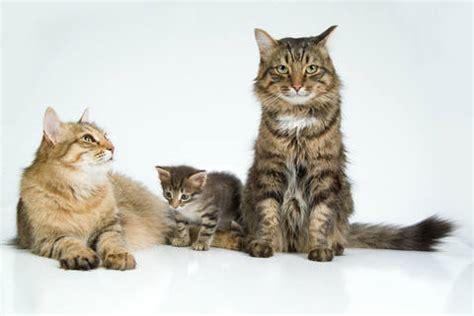 wallpaper of cat family cat art from www best cat art com