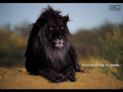 imagenes de animales leon animales que han desaparecido y no sabias que exist 205 an