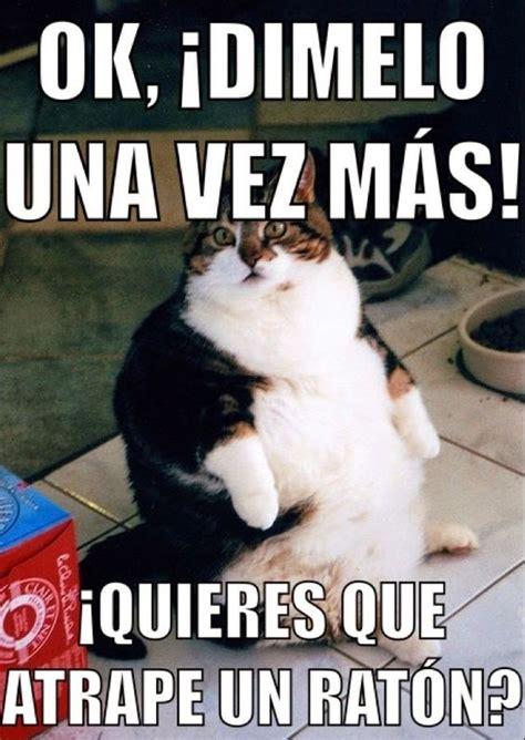 Gordo Meme - meme gordos gorditos chistosos dieta mechitas