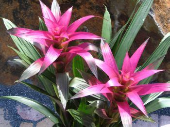 Tropical Plant Care - tropical plant care warburton nursery and greenhouses