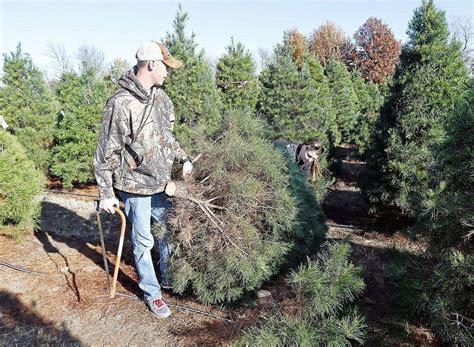 five to find places to buy a live christmas tree scene