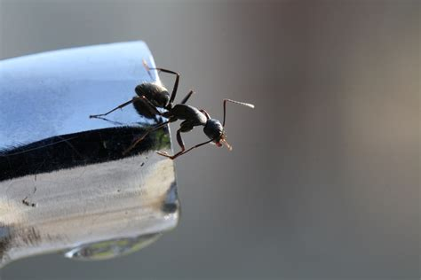 getting rid of ants in the house how to get rid of ants in the house new england today