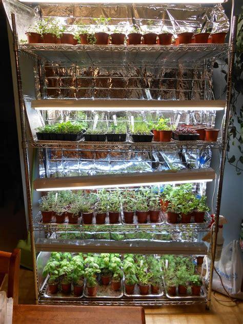 tips  successful indooor seed starting indoor garden