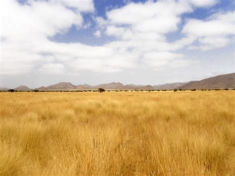 the dry dry yellow grass of namibia free stock photo public domain pictures