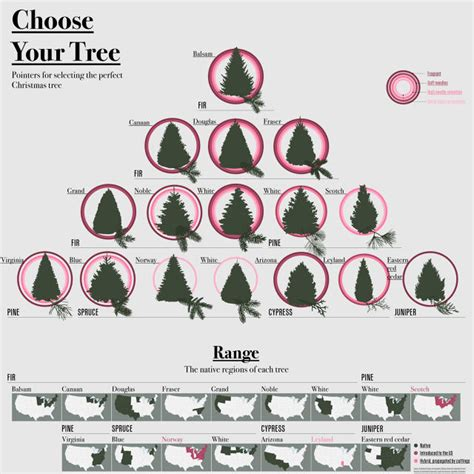 best fragrant christmas tree the best tree money can buy co design business design
