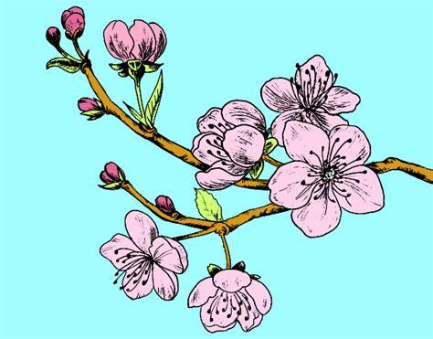 tatuaggio ramo fiori di ciliegio ramo di ciliegio pictures to pin on