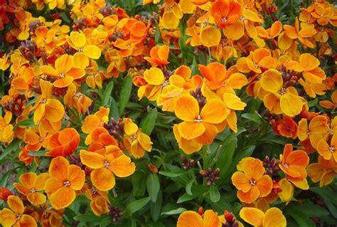 imagenes sobre flores las mejores flores de primavera