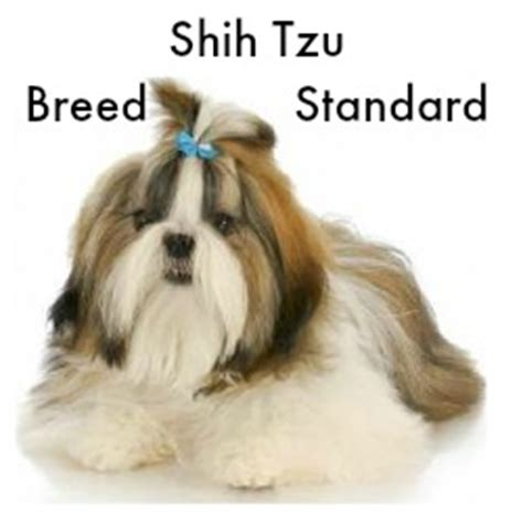 breed standard shih tzu ten reasons why shih tzu dogs