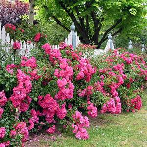 altrosa teppich flower carpet roses flower carpet pink anthony