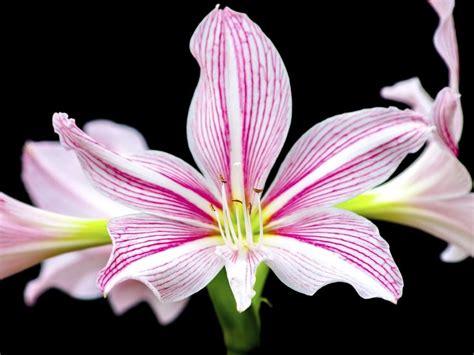 imagenes de flores del co las plantas m 225 s venenosas del mundo el 225 rbol de la