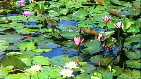 botanical gardens mount coot tha brisbane botanic gardens mount coot tha visit brisbane