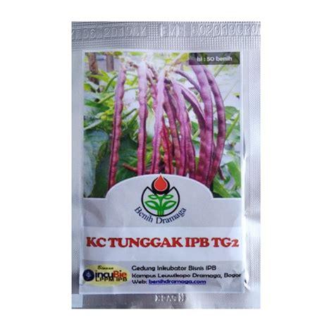 Benih Biji Kacang Panjang Putih Isi 20 Biji Benih benih kacang tunggak ungu ipb tg2 50 biji dramaga